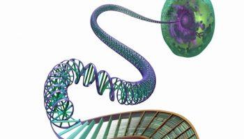 ADN người và những biến đổi